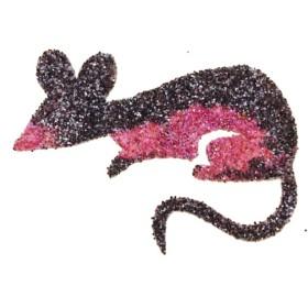 Pochoir tatouage temporaire rat